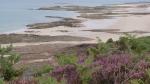 plages sauvages et lande avec bruno(24)